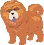 De hond van Chauchau Royalty-vrije Stock Fotografie