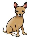 De hond van Chihuahua Royalty-vrije Stock Foto