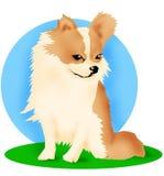 De hond van Chihuahua Stock Foto's
