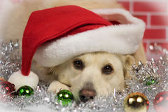 De hond van Christams Stock Foto's