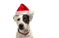 De hond van Christams Stock Foto's
