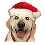 De hond van Christams royalty-vrije stock fotografie