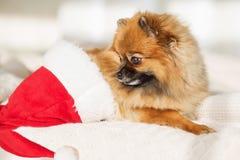 De hond van Christams gelukkige nieuwe jaarkaart 2018 met het symbool van de jaarhond Royalty-vrije Stock Foto