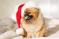 De hond van Christams gelukkige nieuwe jaarkaart 2018 met het symbool van de jaarhond Stock Foto