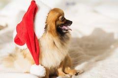De hond van Christams gelukkige nieuwe jaarkaart 2018 met het symbool van de jaarhond Royalty-vrije Stock Afbeelding