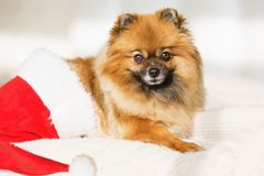De hond van Christams gelukkige nieuwe jaarkaart 2018 met het symbool van de jaarhond Royalty-vrije Stock Afbeeldingen