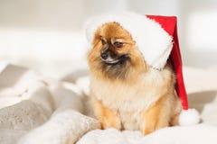 De hond van Christams gelukkige nieuwe jaarkaart 2018 met het symbool van de jaarhond Stock Afbeeldingen