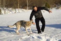 De hond van de aanval Stock Foto