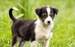 De hond van de baby Royalty-vrije Stock Fotografie