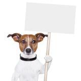 De hond van de banner Stock Afbeeldingen