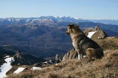 De hond van de berg Stock Foto