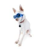 De hond van de beschermende bril Stock Afbeelding