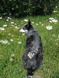 De hond van de bloem Stock Foto