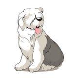 De hond van de bobtail Royalty-vrije Stock Fotografie