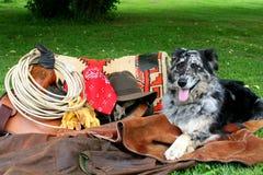 De Hond van de boerderij Stock Fotografie