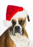 De Hond van de bokser in de Hoed van de Kerstman Stock Fotografie