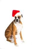 De Hond van de bokser in de Hoed van de Kerstman Stock Foto