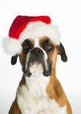De Hond van de bokser in de Hoed van de Kerstman Stock Foto's