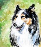 De hond van de collie Royalty-vrije Stock Foto's