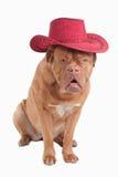 De hond van de cowboy Stock Foto's