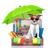 De hond van de de zomervakantie Stock Fotografie