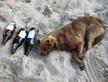 De hond van de drank Stock Foto