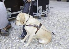 De Hond van de gids voor Blinden Stock Afbeelding