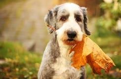 De hond van de herfst royalty-vrije stock afbeelding