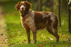De hond van de jager stock foto's