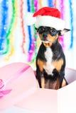 De hond van de kerstman Royalty-vrije Stock Foto