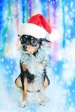 De hond van de kerstman Royalty-vrije Stock Fotografie