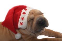 De hond van de kerstman Stock Foto