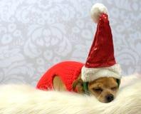 De Hond van de Kerstman van de slaap Stock Foto's