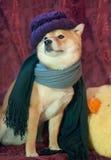 De hond van de manier Royalty-vrije Stock Afbeeldingen
