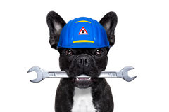 De hond van de manusje van allesmoersleutel Stock Afbeelding