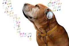 De hond van de muziek Stock Fotografie