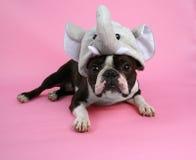 De hond van de olifant Royalty-vrije Stock Foto
