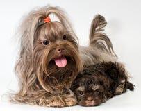 De hond van de overlapping met puppy royalty-vrije stock afbeeldingen
