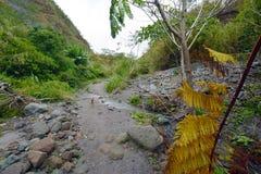 De hond van de Pinatubolava Stock Foto