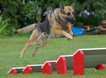 De hond van de politie Royalty-vrije Stock Fotografie