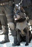 De hond van de politie Stock Fotografie