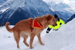 De hond van de redding Stock Foto's