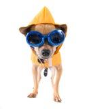 De hond van de regen Stock Foto's