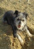 De hond van de rupsband! stock afbeelding