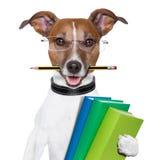 De hond van de school Stock Foto