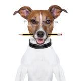 De hond van de school stock afbeelding