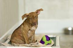 De Hond van de schuilplaats royalty-vrije stock afbeeldingen