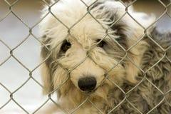 De Hond van de schuilplaats stock afbeelding