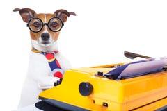 De hond van de secretaresseschrijfmachine Royalty-vrije Stock Afbeelding