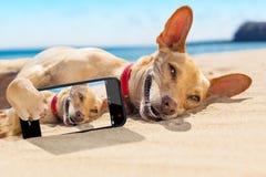 De hond van de Selfiezomer royalty-vrije stock afbeelding